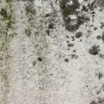 boston mold removal